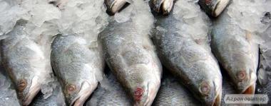 Продам заморожену рибу оптом