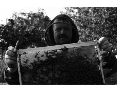 продам пчелосемьи пчелопакеты