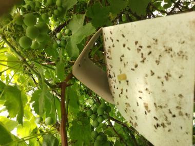 Продам феромонні пастки для лову комах запасів, поля, саду