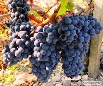 Натуральне вино Мерло, червоне сухе