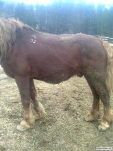 Продам коня +380 (68) 620 10 82