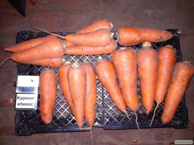 Продам хорошую молодую морковь сорта Абако