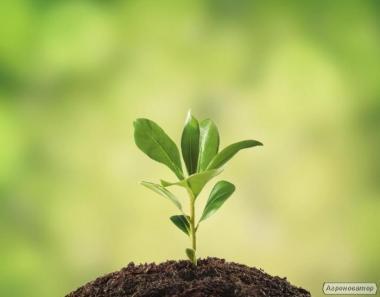 Зола растительная (калийное удобрение)