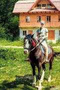продам гарного молодого коня