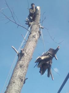 Спил дерев у Дніпрі та Дніпропетровської області