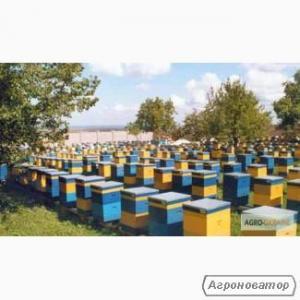 Продам бджолопакети Карпатської породи з високопродуктивними матками.