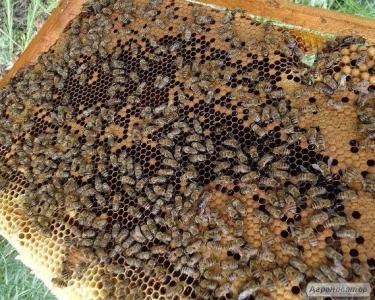 Бджолосім'ї