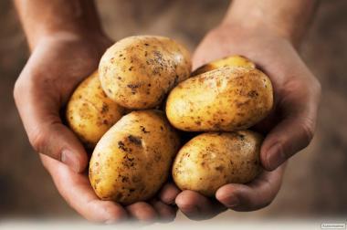 Високоякісна картопля з доставкою