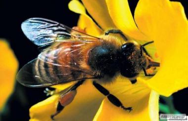 Бджолопакети 2017 року.