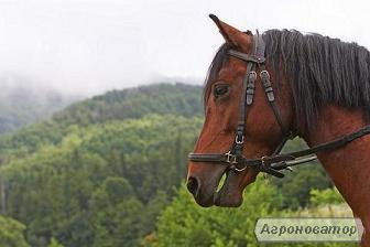 Продам спокійного робочого коня