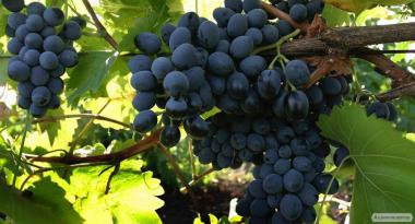 Домашнее вино (доставка по Одессе)