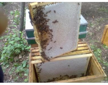 Продам мед с липы.