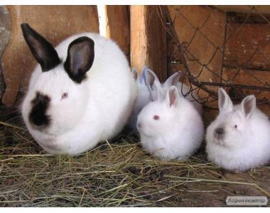 Кролики різних порід та віку продам або обміняю на Ваші варіанти.