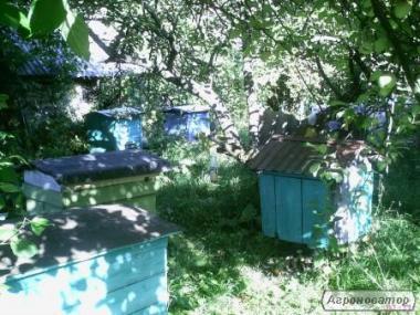 Продам пчелиные семьи,пчелопакеты,ульи.