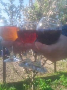 Вино вишневе