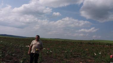 Саджанцево-деревня в Сокольском районе Вологодской области .Саджанці розы [троянди ]