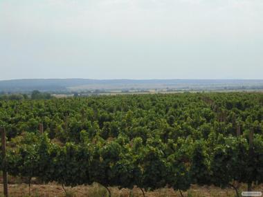 Продам вино из европейских сортив винограда