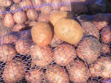 Продам картошку картофель картоплю Беллароза ОПТ