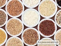 Предоставим услуги по переработке зерна