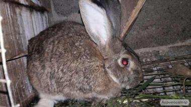 Кролики ,самки,самці,кроленята ПРОДАЖ ТЕРМІНОВО!!!