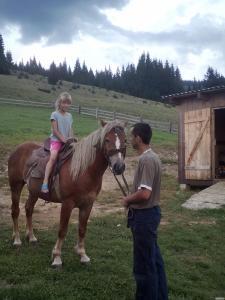 продам лошака 3 роки