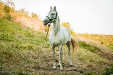 Продаю коней.