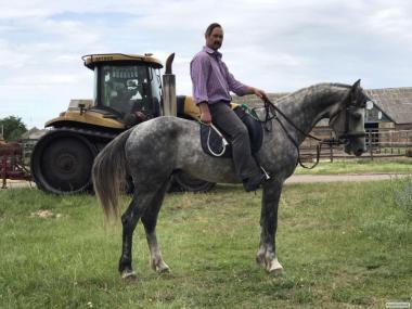 Продаються коні різних порід