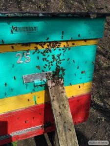 Бджолосім'ї, пакети