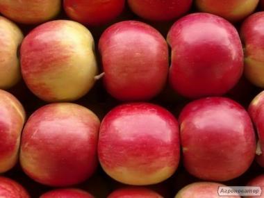 Продам яблока Айдаред