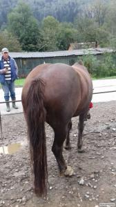Продаються два гарних коня