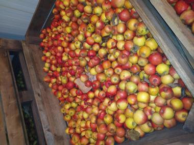 Продам Яблуко,Яблука,Сік,різних сортів з Холодильника