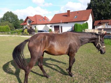 Верховые лошади