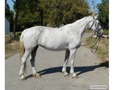 Орловские лошади