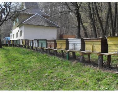 Реализация пчелопакетов и пчеломаток