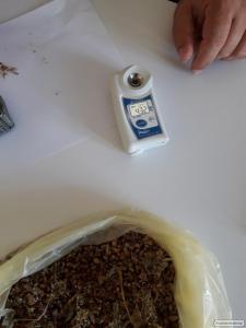 чеснок семена воздушка