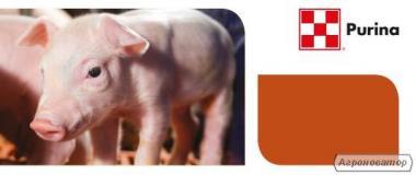 Комбикорм, премикс, концентрат Purina для свиней, поросят, свиноматок.