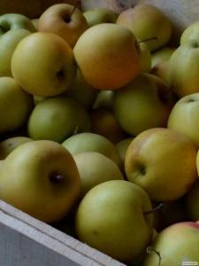 Продам Яблоки 1 сорт