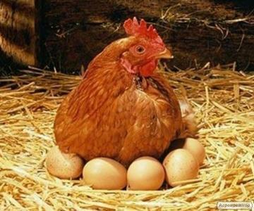 Продам яйця курей-несучок