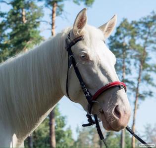 Коня дитяча кобила