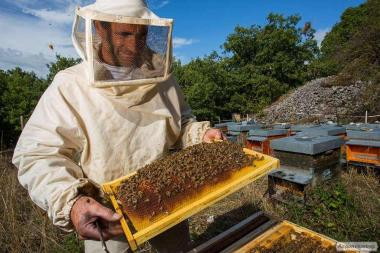 Продам частину своїх бджіл