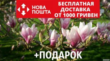 Магнолия Суланжа семена 10 шт (Magnolia soulangeana) для саженцев