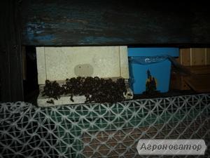 Пчелосемьи породы Карника