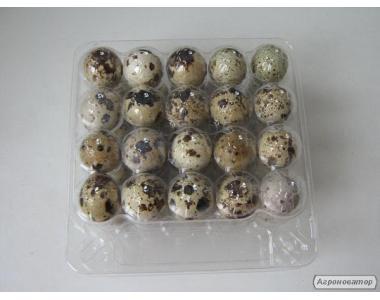 Прозрачная упаковка для яиц