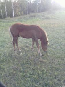 лошак 4 месяца