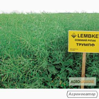Семена рапса озимого ЛЕМБКЕ гибрид ТРУМПФ, г. Киев