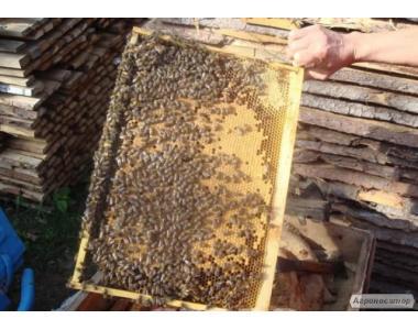 лісове різнотрав'я мед