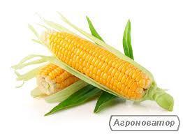 Насіння кукурудзи ЕС Лаймс