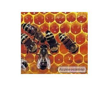 Пчеломатка Українська степова