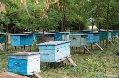 Продам бджолопакети (пчелопакеты) 2020