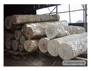Кругляк вільхи і тополі, послуги лісовоза
